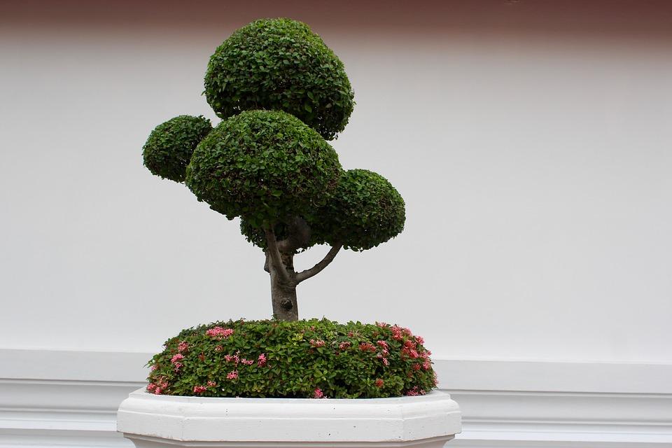 Comment choisir le bonsaï le plus facile à entretenir ?