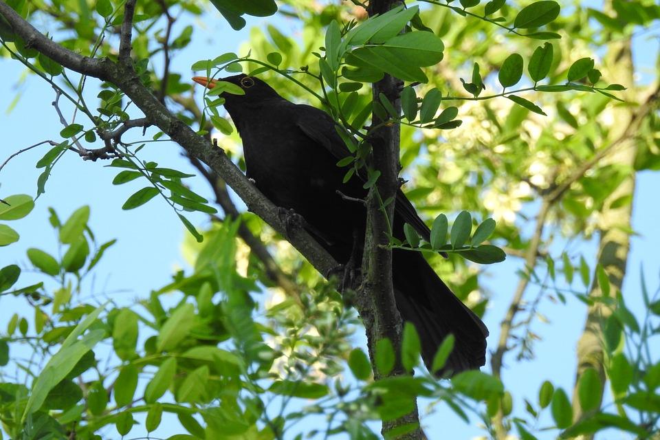 Comment prévenir la nidification des étourneaux à l'aide de la lutte contre les oiseaux?