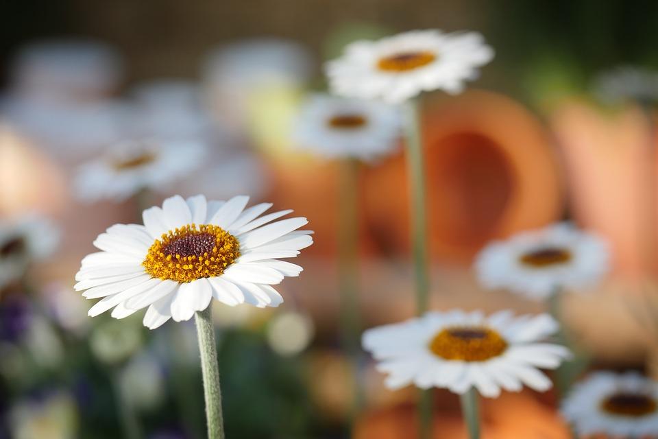 Avantages d'avoir des fleurs et des plantes à la maison