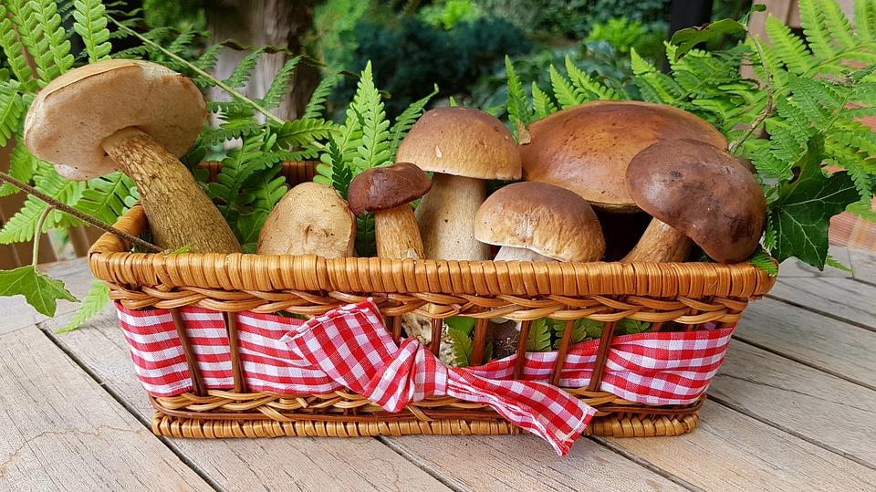 Quels champignons sont comestibles ?
