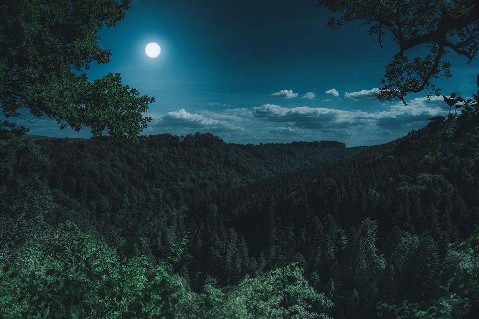 Influence de la lune sur la culture et le soin des plantes