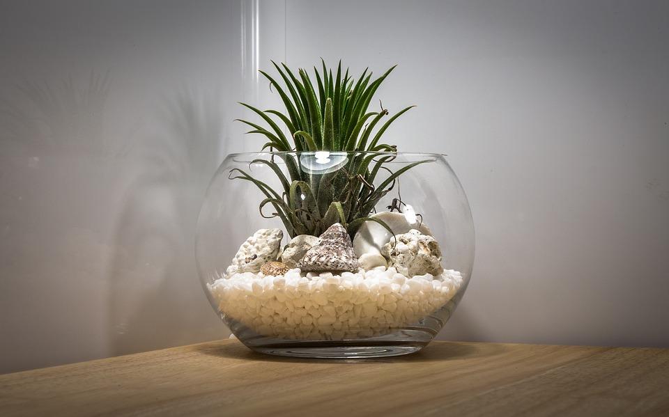 Comment faire un terrarium et quelles plantes sont les plus appropriées?