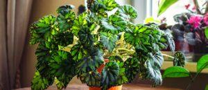 fertiliser naturellement les plantes d'interieur